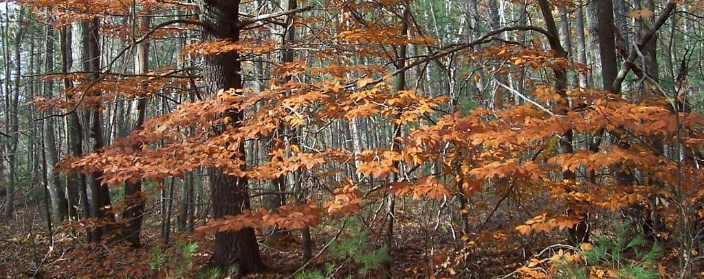 Kennebunk fall photo