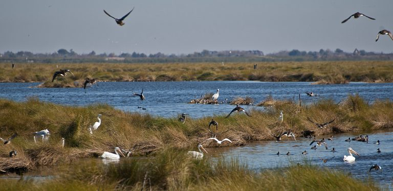 Bayou Sauvage National Wildlife Refuge day trips from new orleans