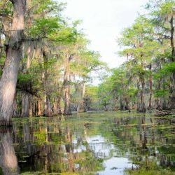 Top 10 FUN Things to do in Louisiana with kids!