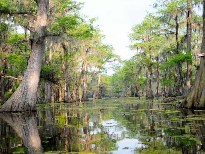 Things to do in Louisiana with kids