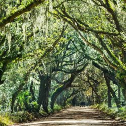 10 Fun Things to do in South Carolina with Kids on a Family Vacation