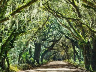 things to do in South Carolina with kids