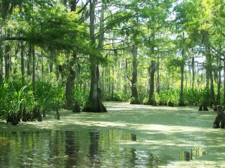 A trip to a Louisiana swamp is a great day trip from New Orleans
