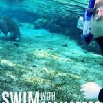 Bucket List: Swim with Manatees in the Crystal River in Florida 1