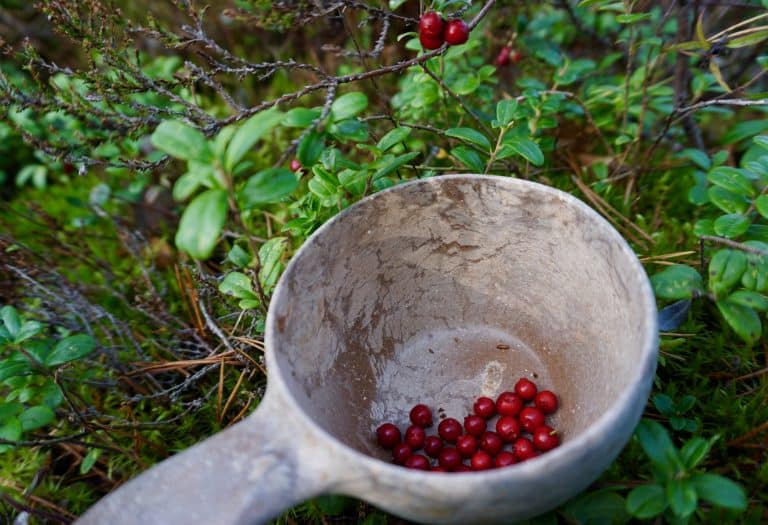 Foraging for berries and mushrooms in Nuuksio National Park