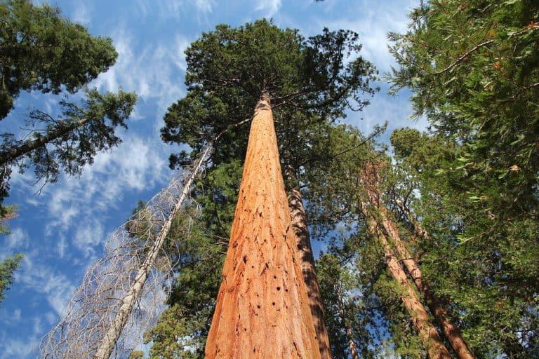 Mairposa Grove in Yosemite Best time to visit Yosemite