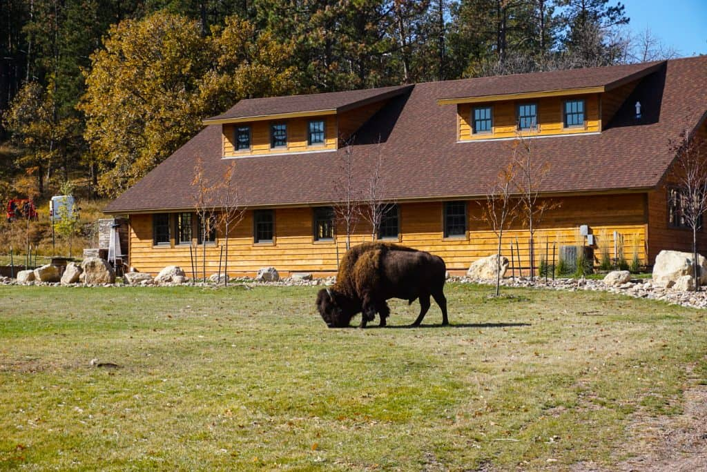 Things to do in Black HIlls include visiting Custer State Park