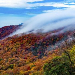 Top 10 Fun Things to do in Tennessee with Kids on a Family Vacation