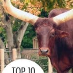 Top 10 Awesome Things To Do in Houston with Kids! 2