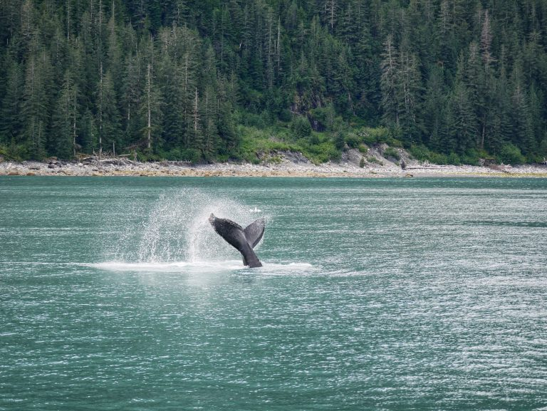 Kenai Fjords National Park whale