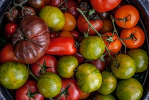 Tomato Planting Tips -Picking the right tomato plant