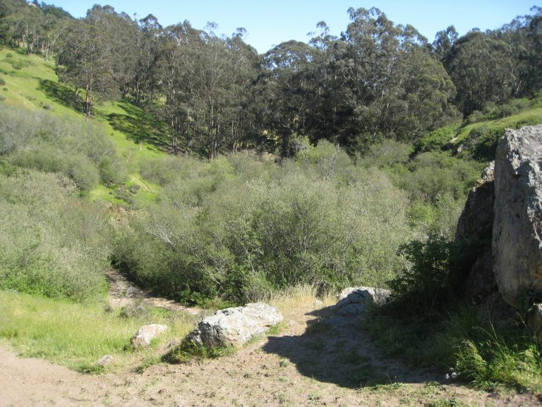 Hiking Glen Canyon Park in San Francisco
