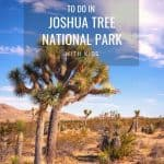 Joshua Tree National Park- When to Visit, Things to do, Best Hikes, & More! 4