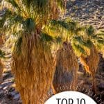 "10 ""Must-Do"" Fun Things to do in Palm Springs with Kids 2"