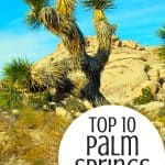 Top 10 Amazingly Fun Things to do in Palm Springs with Kids 4