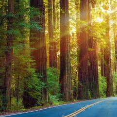 25 Awesome Things to do in Northern California with Kids on a Family Vacation