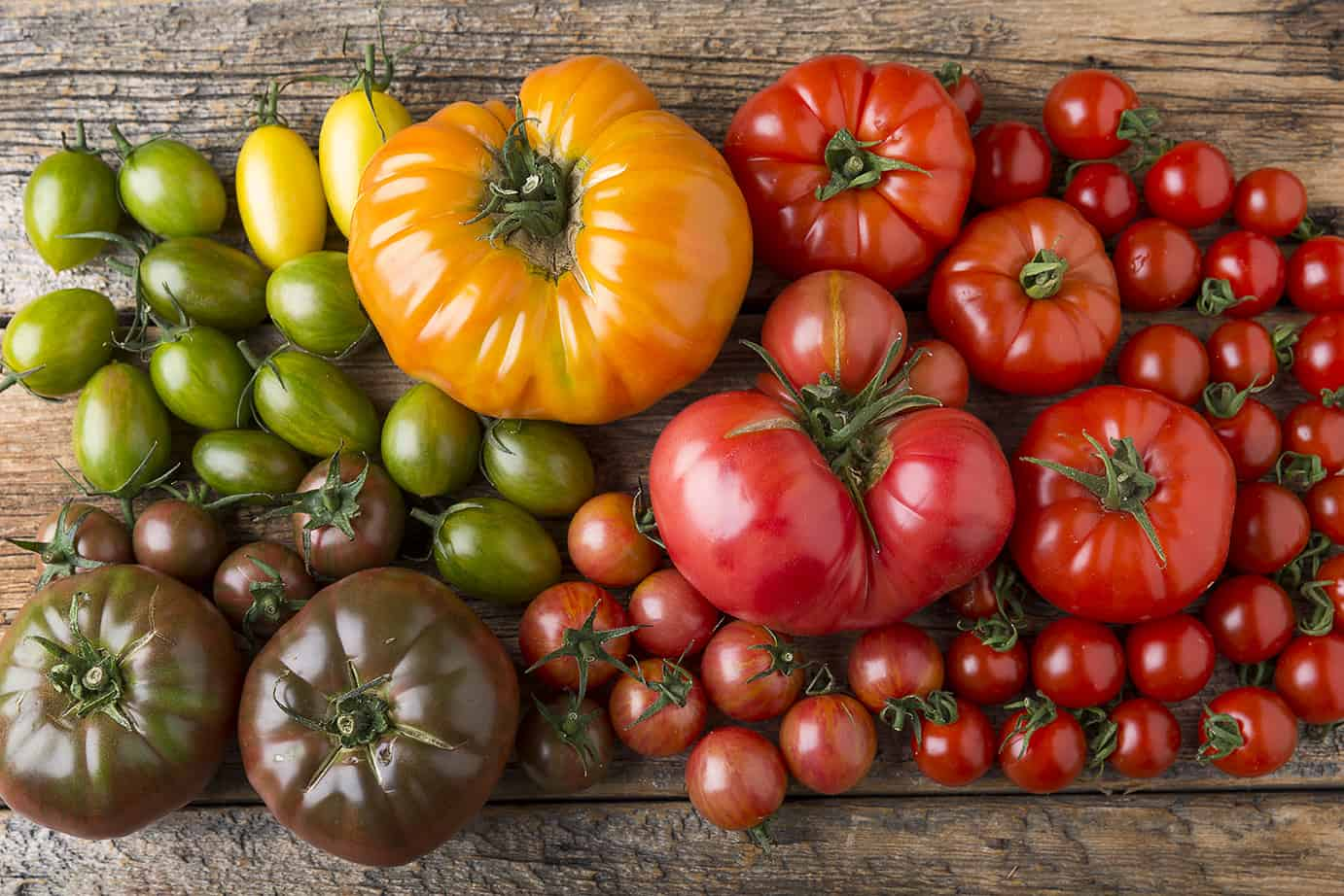 Tomato Growing Tips: 10 Secrets to a Successful Tomato Crop