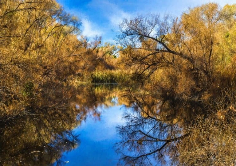 Hassayampa River Preserve by flickr Sheila Sund