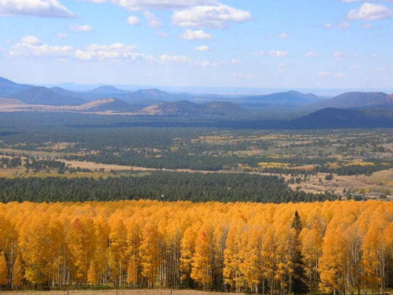 fall colors in arizona, flagstaff by flickr bookfinch