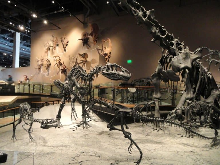 Past World's Exhibit at The Natural History Museum of Utah