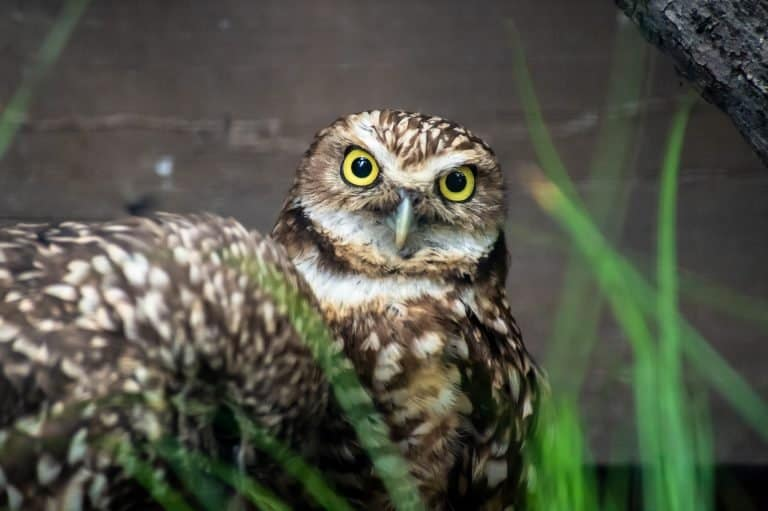 tracy aviary things to do in salt lake city with kids by flicr brian lauer