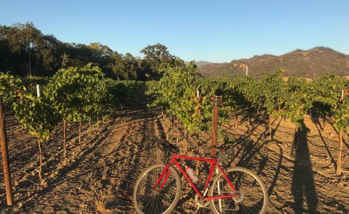 Bicycling in the midst of the vineyards   Photo by: Brennan Pang
