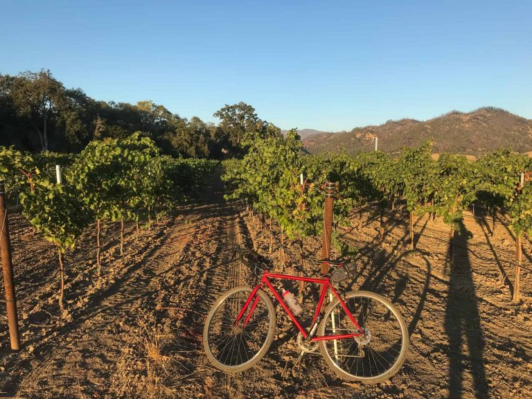 Bicycling in the midst of the vineyards | Photo by: Brennan Pang