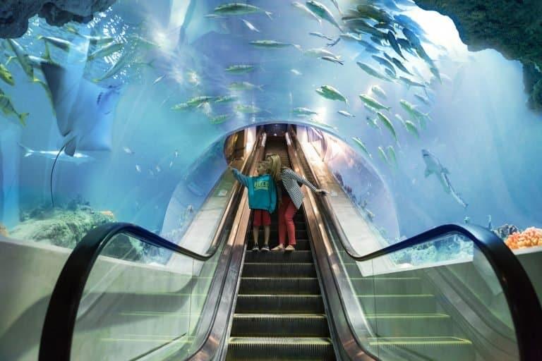 The Deep Ocean Escalator at OdySea Aquarium Credit OdySea Aquarium
