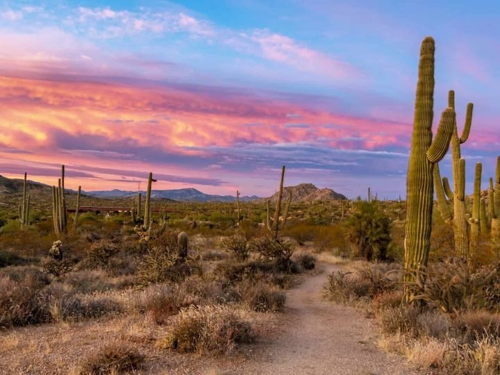 10 Best Things to do in Scottsdale with Kids