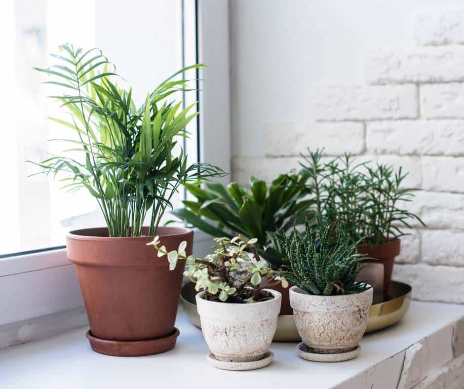 Your house checklist before vacation should include watering plants