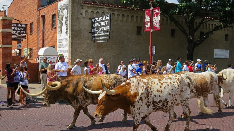 Fort Worth Longhorn Cattle Drive