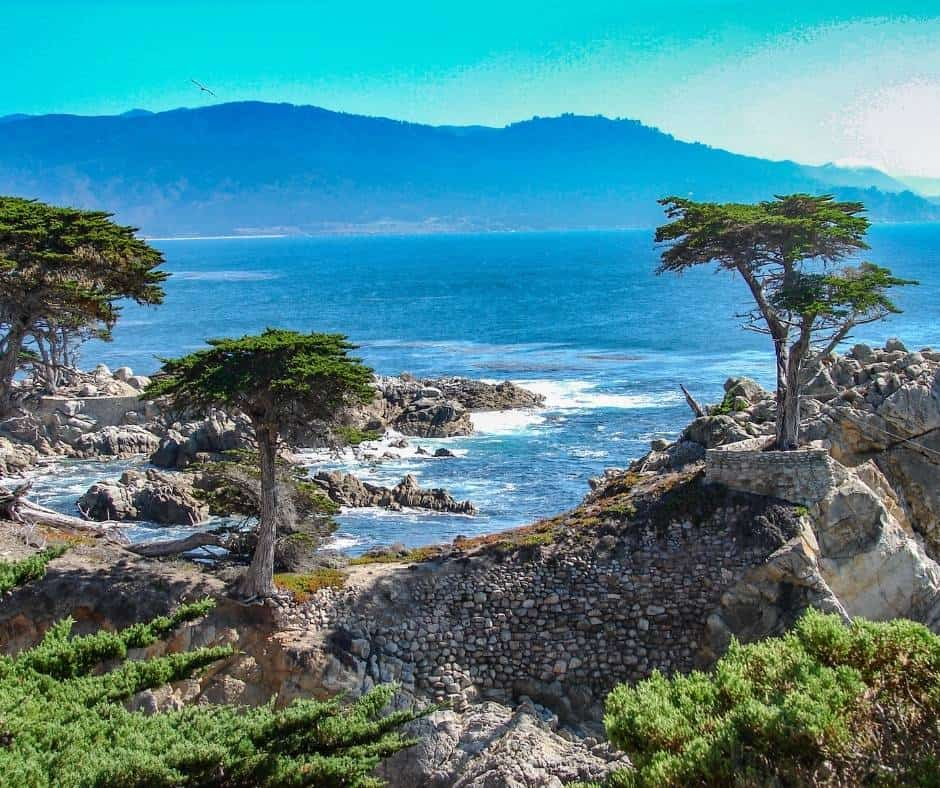 Things to do in Monterey with Kids Point Lobos