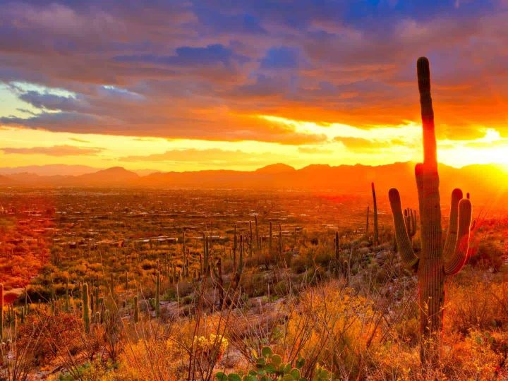 Things to do in Tucson with Kids