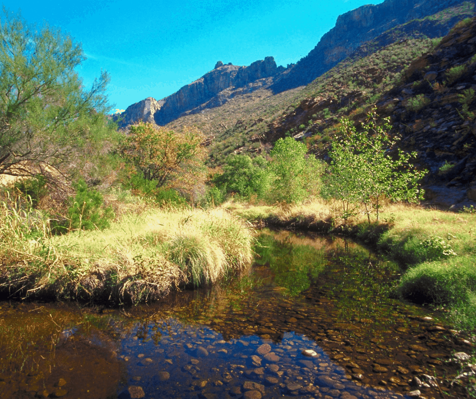 One of my favorite things to do in Tucson with kids is hike in Sabino Canyon