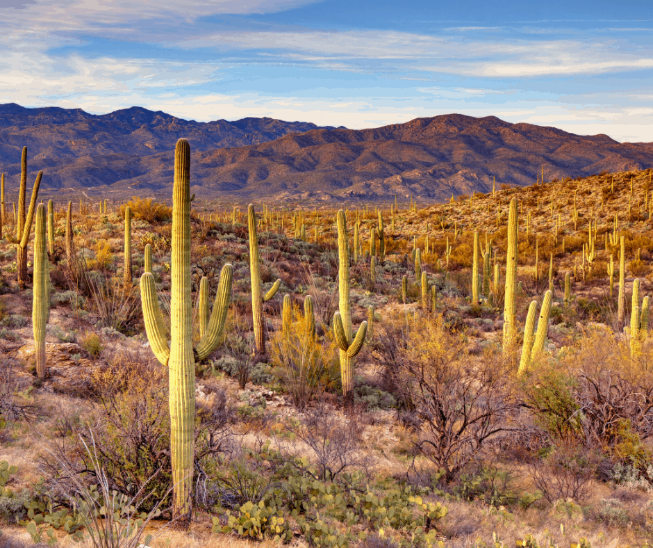 Visiting Saguaro National Park is one of the best things to do in Tucson with kids