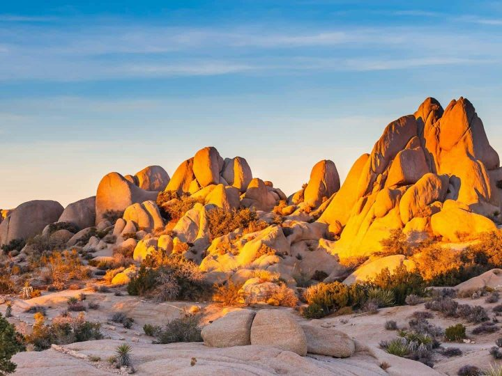 Joshua Tree with Kids- When to Visit, Things to do, Best Hikes, & More!