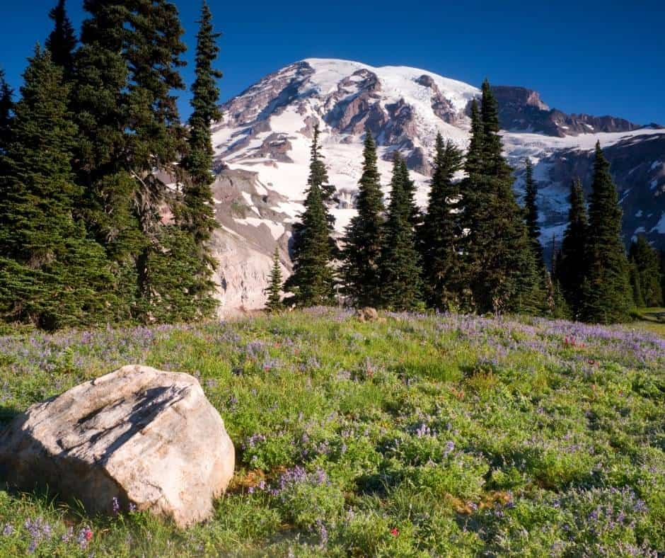 Mt Rainier is one of our favorite weekend getaways from Seattle