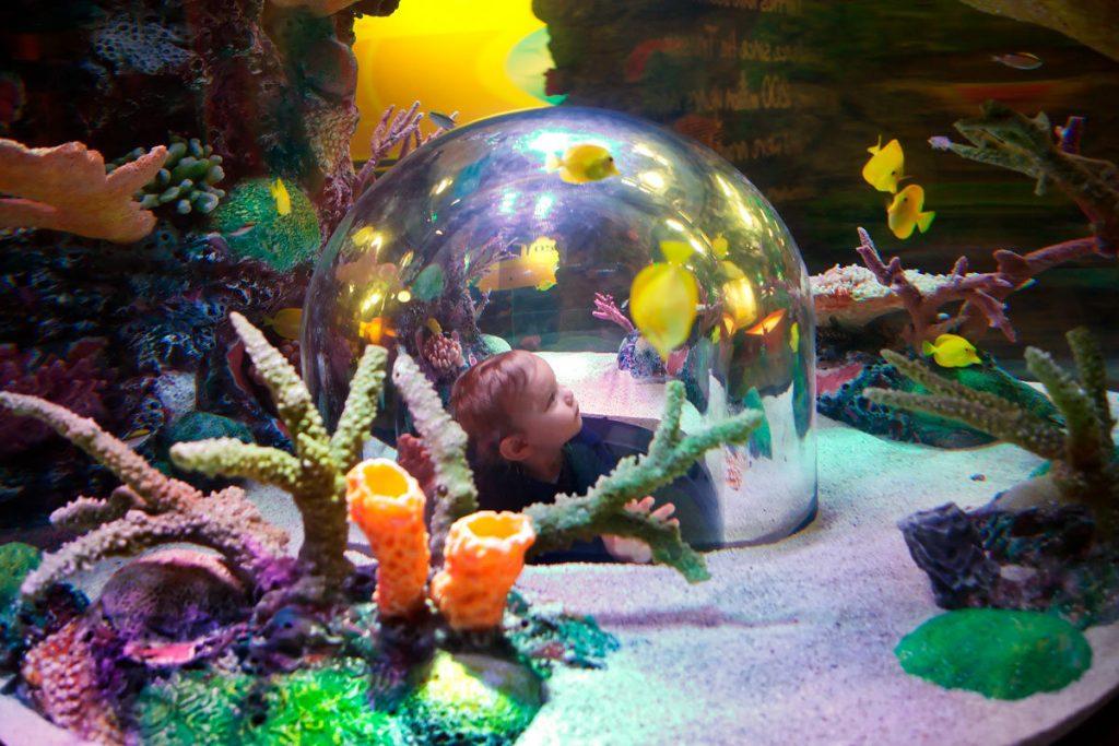 things to do in Kansas City with Kids include Sealife Aquarium Kansas City