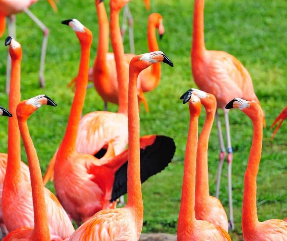 One of the best things to do in Miami with kids is visit Zoo Miami
