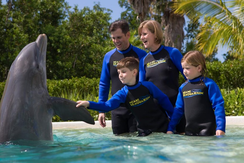 Things to do in Miami with kids include visiting the Seaquarium