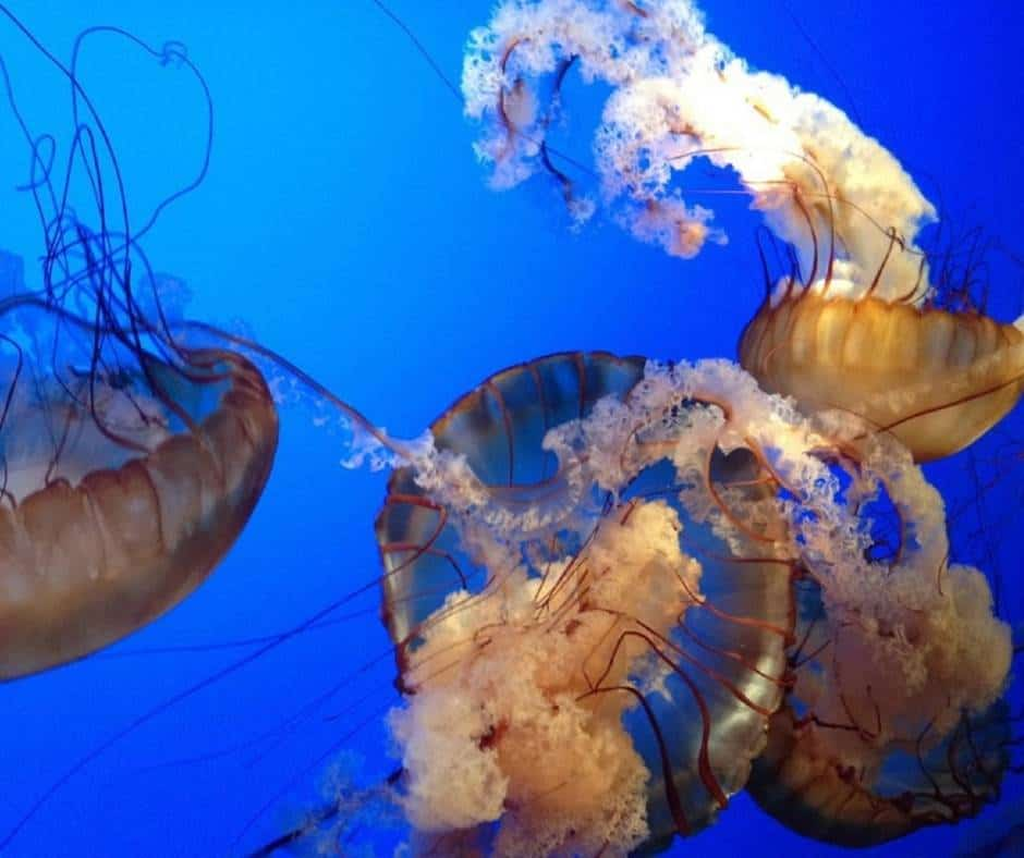 things to do in Chattanooga with kids include visiting the Tennessee Aquarium