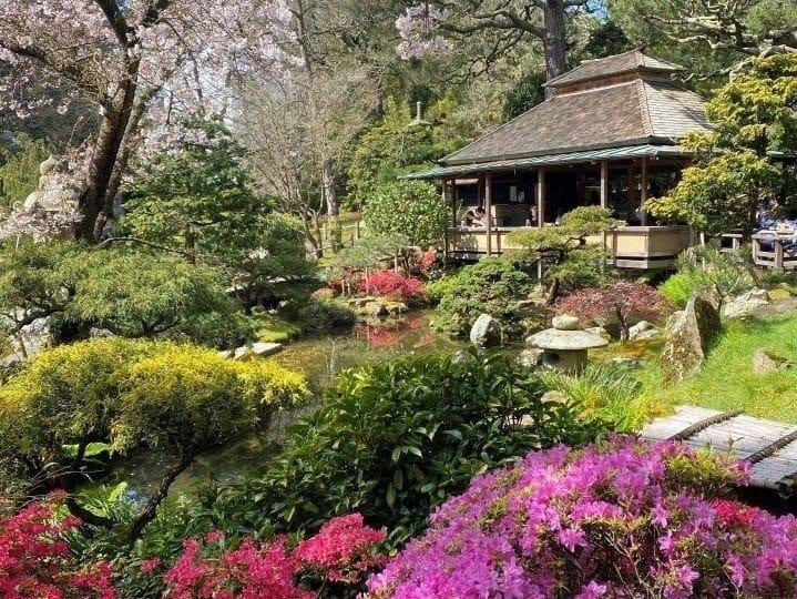 Things-to-do-in-Golden-Gate-Park-Japanese-Tea-Garden