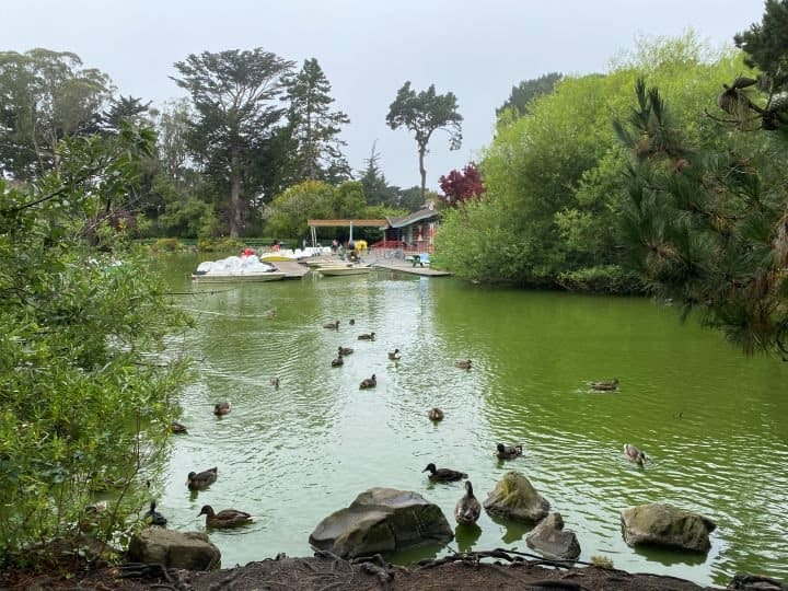 Stowe Lake is a highlight of Golden Gate Park San Francisco