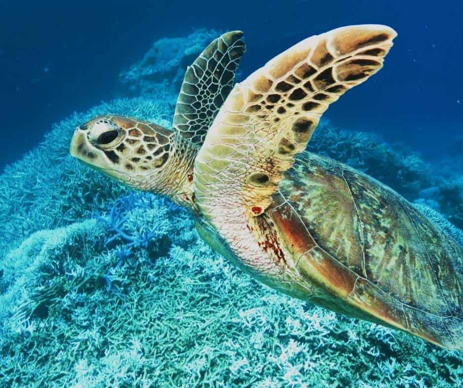 things to do on the big isaldn with kids include snorkeling with sea turtles