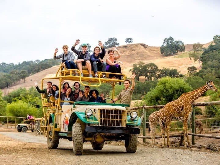 Safari West is a great daytrip from Napa