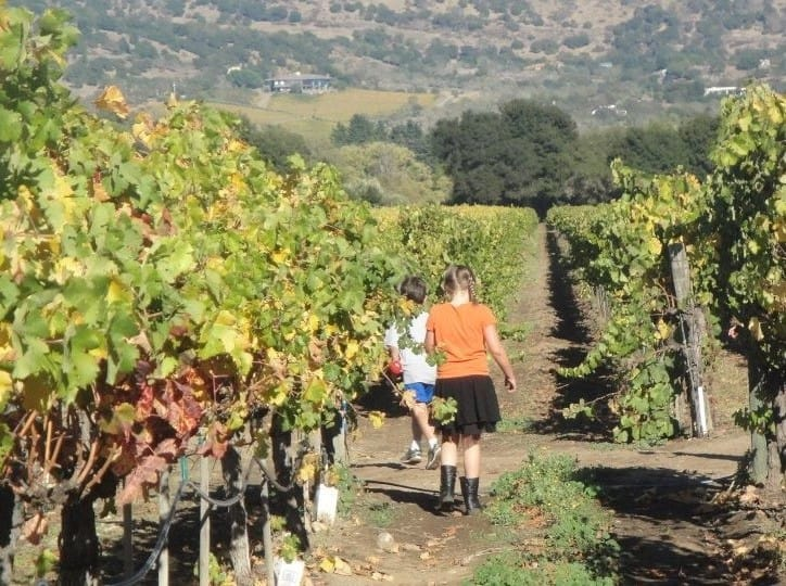 things to do in Napa with kids include visiting wineries that welcome children