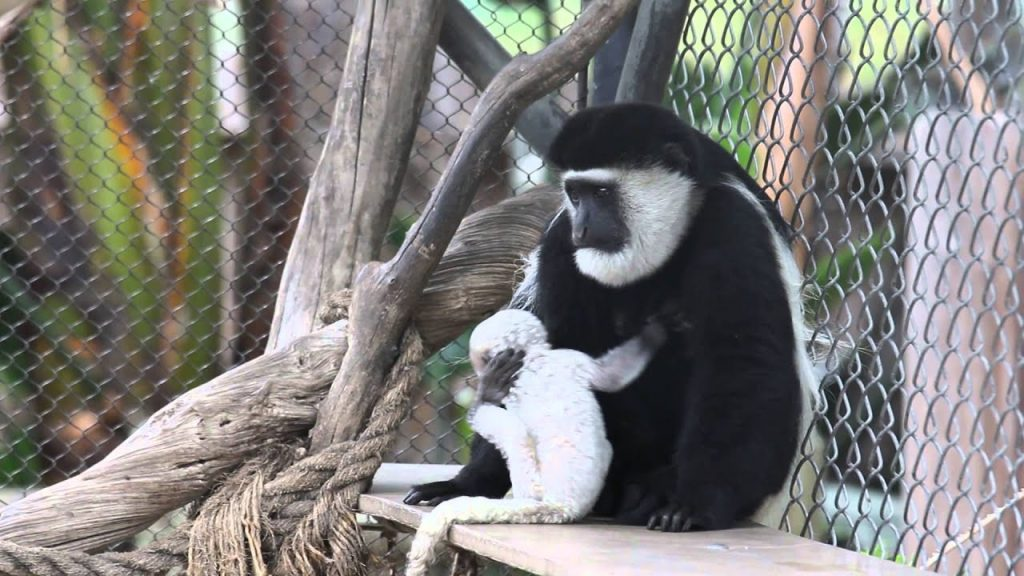 Visiting the Santa Ana Zoo is one of the fun things to do in Orange County with kids
