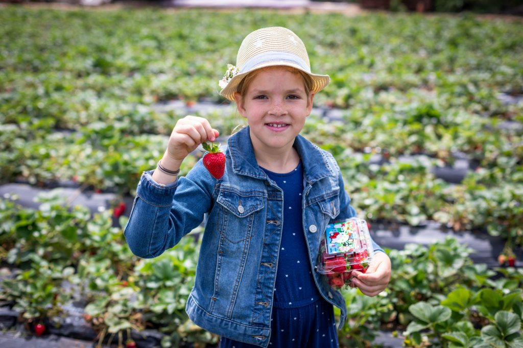 Picking strawberries at Tanaka Farms in Irvine