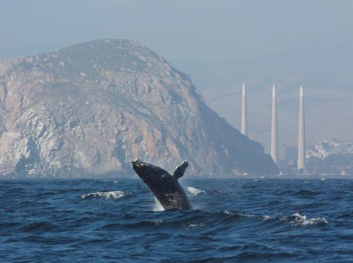 Whale watching near Morro Bay