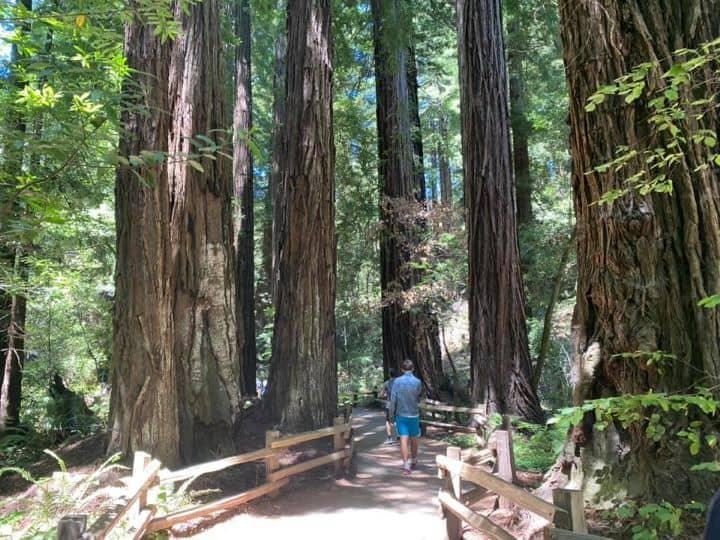 Muir Woods is a great day trip from San Francisco